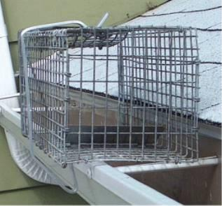 cage on side of home