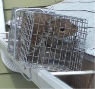 squirrel in cage, side of home